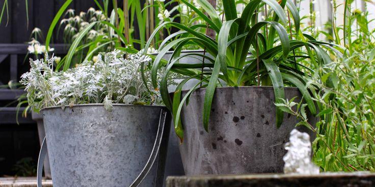SENSOMMER - TID TIL STATUS - Garden design, colors and considerations