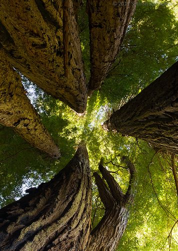 giants: Photos, Forests, Flora, Amidst Giant, Spacesandplac, Incredible Photography