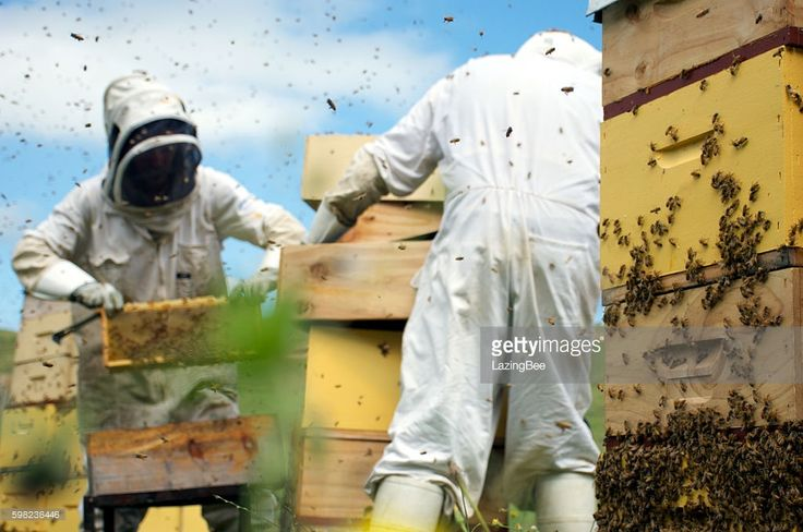 Commercial Beekeepers work with their hives in the background. This focus of this image is the Beehives in the foreground.
