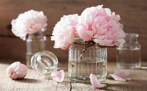 Обои цветы, натюрморт, лепестки, розовые цветы, спа, розы