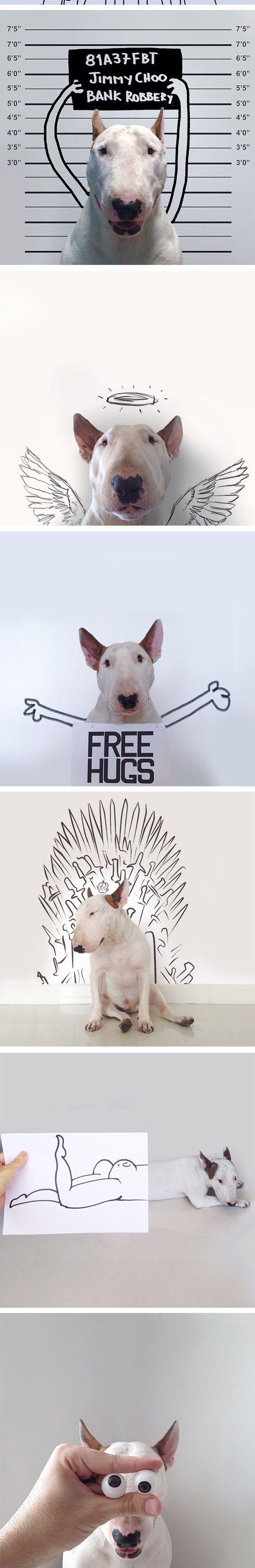 Witzige Poster mit einem #BullTerrier | #lustig #funny #hund #dog #hunde #dogs #terrier