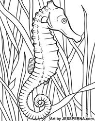 Seahorse Coloring Page Illustrator American Artist Drawings