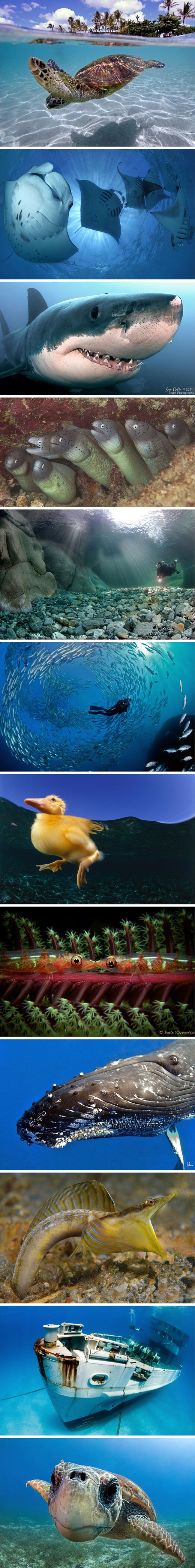 Amazing underwater photos.
