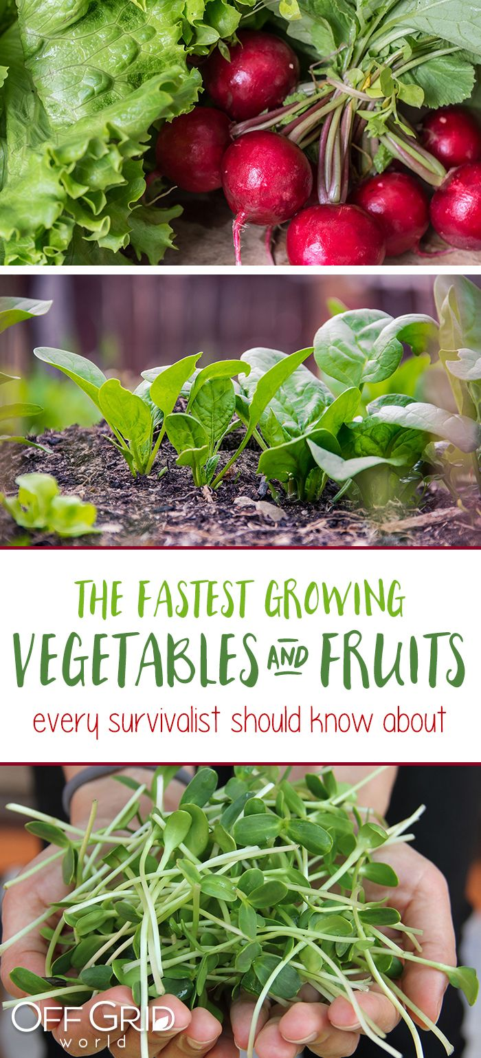 The Fastest Growing Vegetables And Fruits Every Survivalist Or Impatient Gardener Should Know How To Fast Growing Vegetables Growing Vegetables Growing Fruit