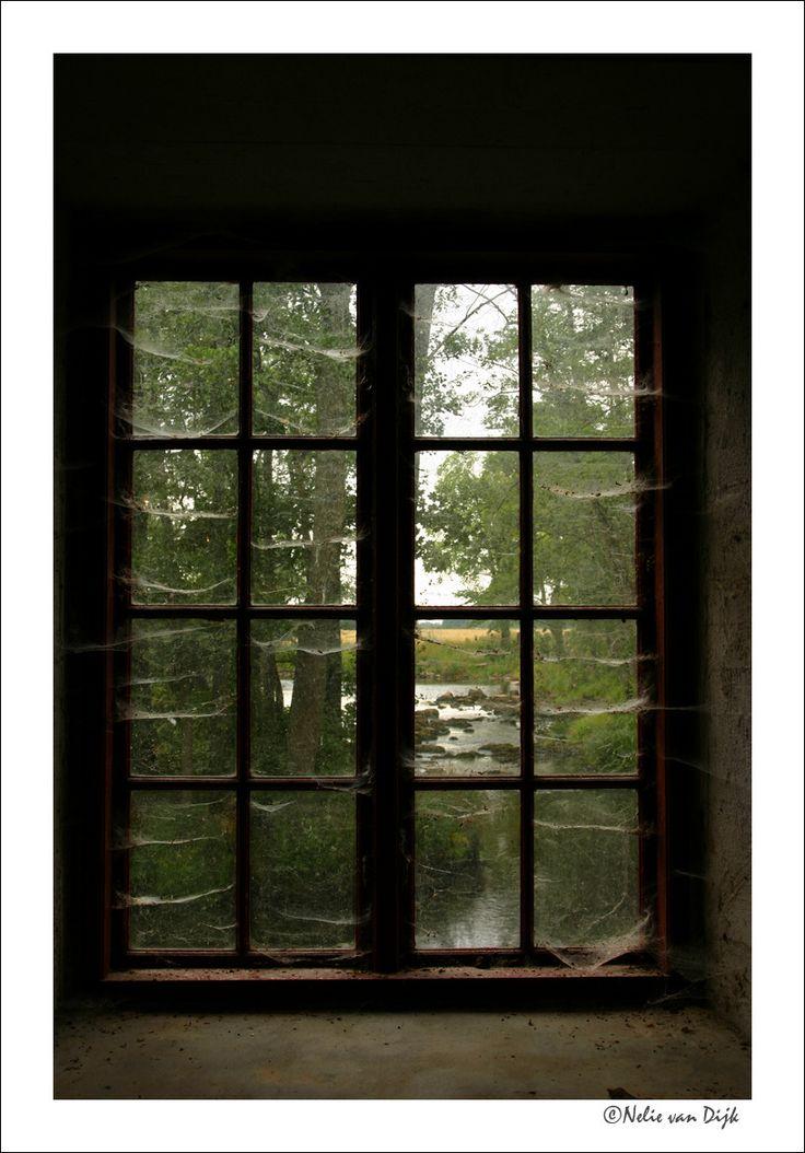 Spinnenweb in venster