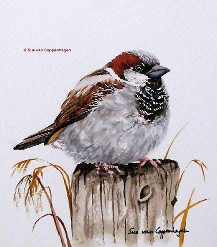 """His eye is on the sparrow, and I know He is watching me.  Sparrow Bird Art by Bird Artist Sue van Coppenhagen"