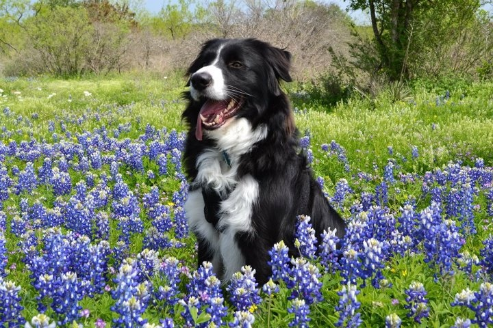 Dexter in the Texas hill country, Hill
