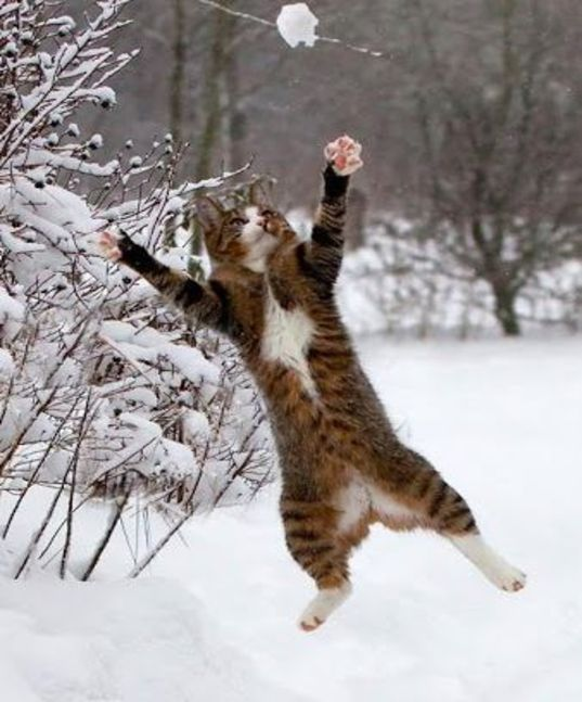 I'm gonna catch that snowball