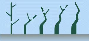 2. Trunk - A Guide to Bonsai Basics : Bonsai Style, Secret of Shaping