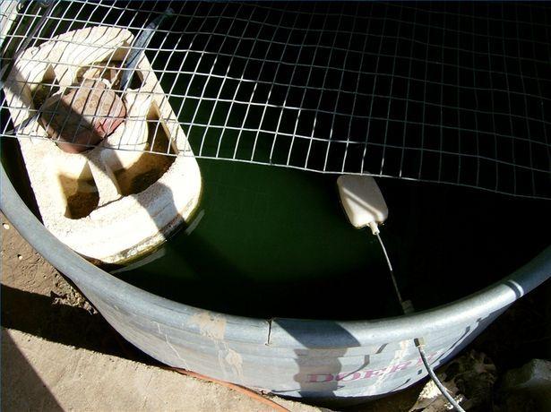 Raising Bait Minnows in Tanks for Fishing