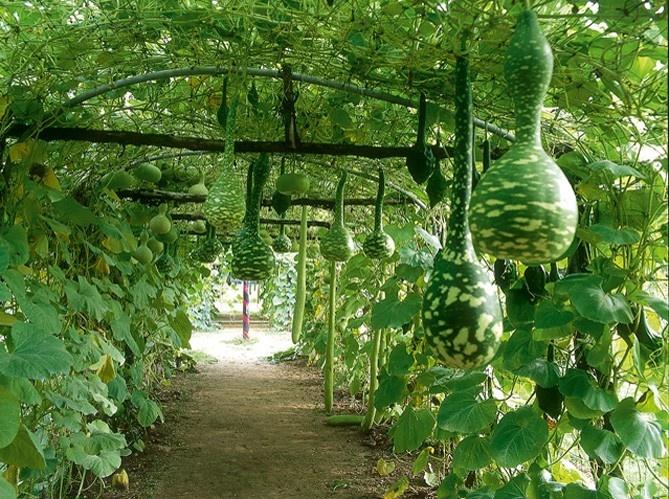 Trellis Arbor Designs