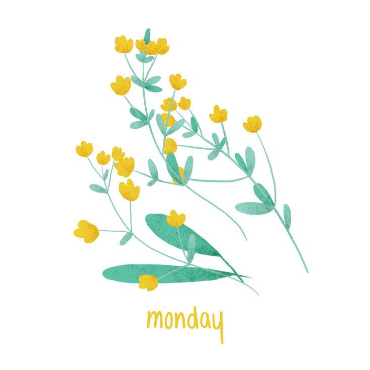 Monday - #Monday #Illustration #Plant #Buttercup #Flower