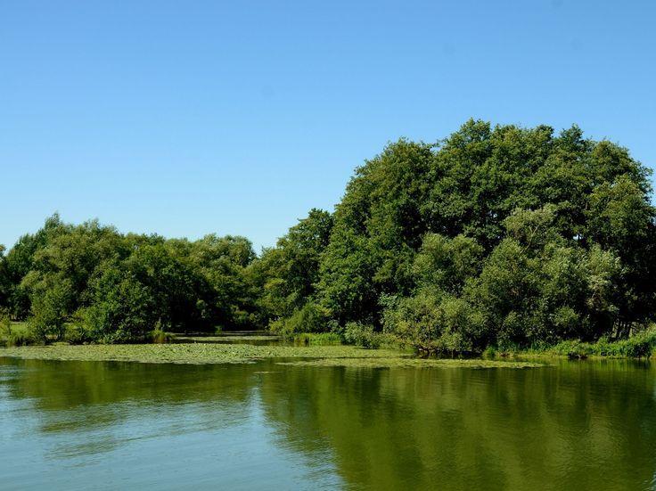 Bras mort sur la Meuse