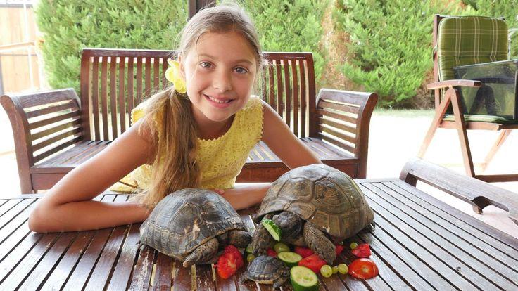Черепаха Челленж! Лучшая подружка Полен и животные для детей. Домашняя ч...