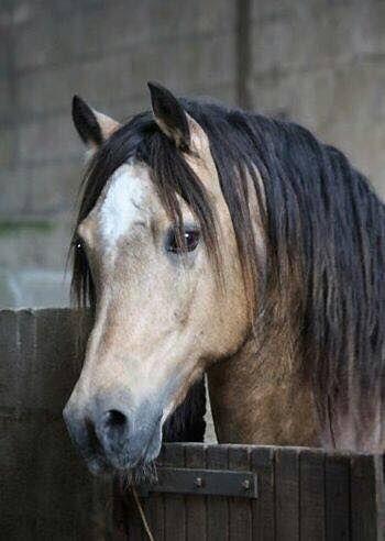 (94) Horses Are Amazing - Photos