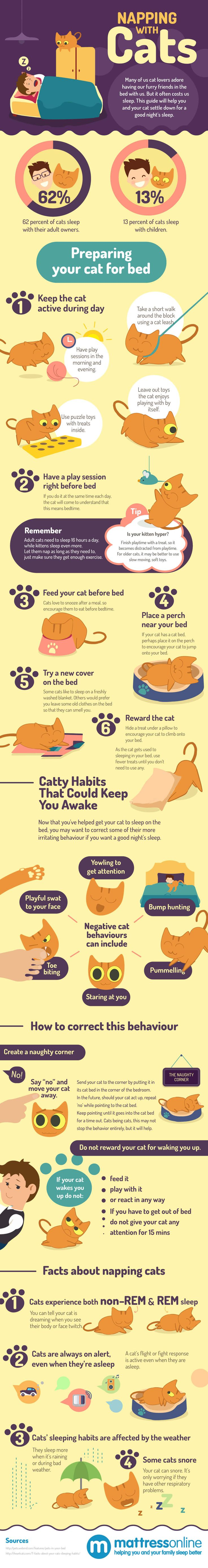 An infographic guide for all cat owners who want their cat to sleep on their bed, but also want to get a good night's sleep.