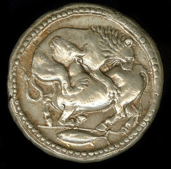 Greek. 500BC-424BC. Silver. Minted in Acanthus (Macedon). The obverse of a Silver coin, depicting a Lion attacking a bull with its teeth and claws. A tunny fish swims below them.
