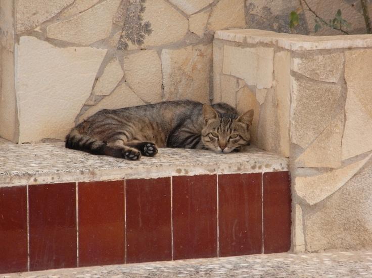 saraccino: Inspirations: Cats (Formentera, spain)