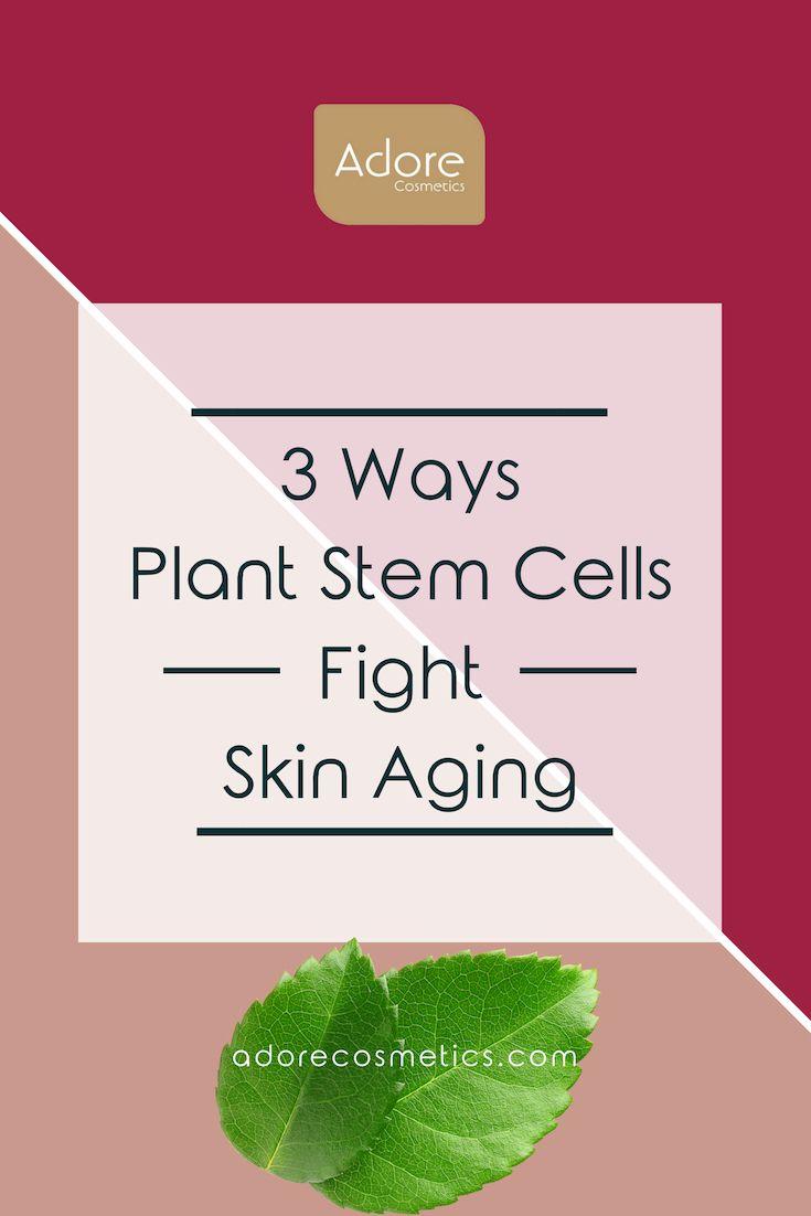3 Ways Plant Stem Cells Fight Skin Aging Plant Stem Cell Aging Skin Stem Cells