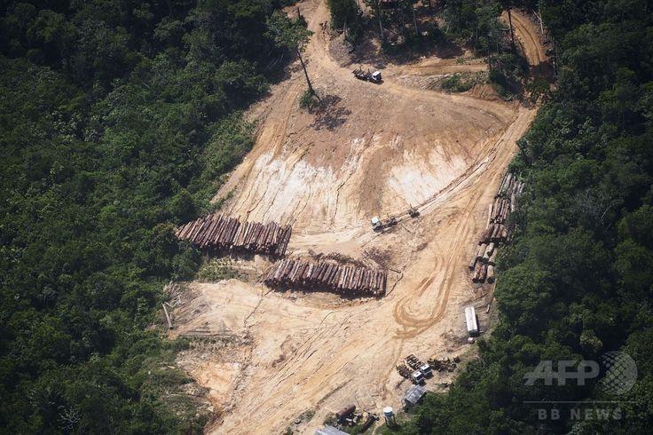 ブラジル・パラ(Para)州に広がる熱帯雨林で行われている違法伐採の現場にある材木置き場(2014年10月14日撮影)。(c)AFP/Raphael Alves ▼16Oct2014AFP|上空から見たアマゾンの違法伐採現場 http://www.afpbb.com/articles/-/3029095 #Illegal_logging #Para_Brazil
