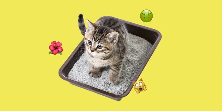 Вывести запах кошачьей мочи весьма непросто, но всё-таки возможно. Главное — действовать быстро и использовать правильные средства в строгой последовательности.