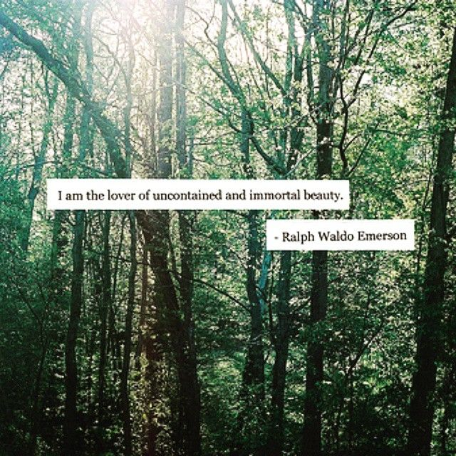 Woods Quotes: #quotes #woods #forest #nature #Bohemian