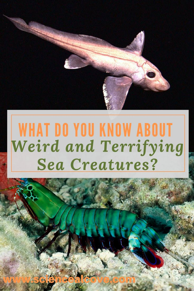 Try your hand at a quiz on all sea creatures terrifying. Read over my sea creatures posts if you want a head's up!#seacreatures #weirdcreatures #sciencequiz