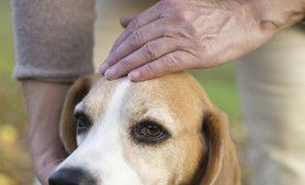 Top 10 Warning Signs of Cancer in a Pet
