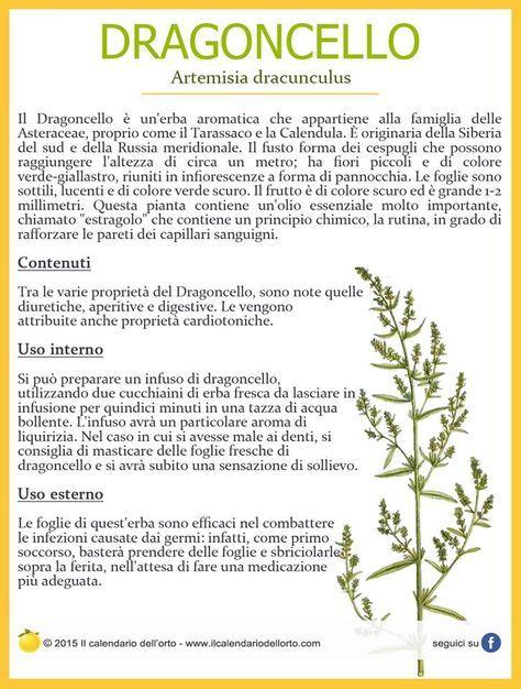 Proprieta' delle erbe : il Dragoncello