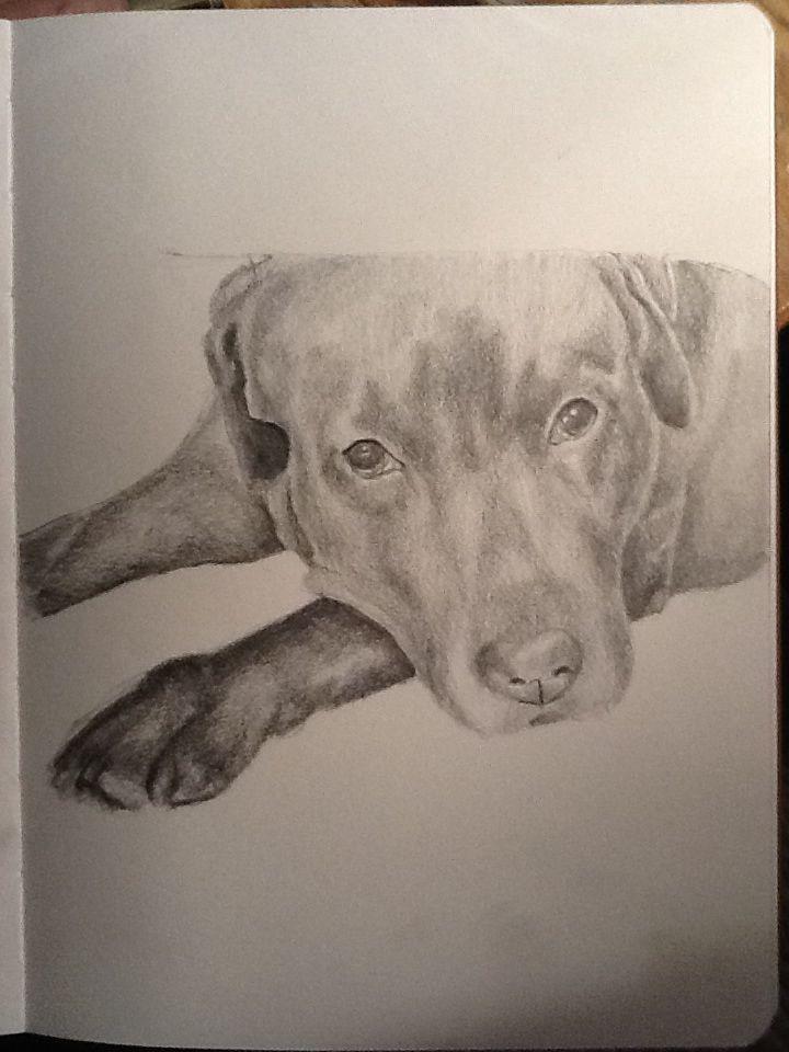 Bonus, el mejor perro del mundo. Dibujo a lapiz - Veronica Reynal