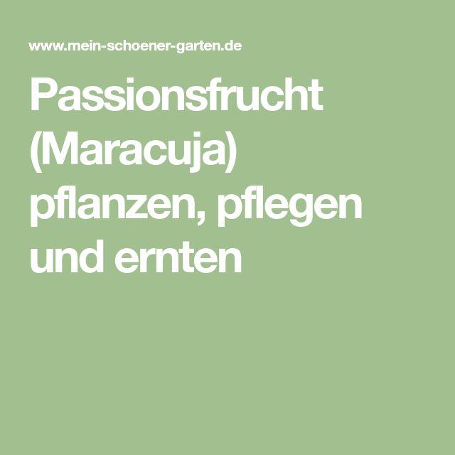 Passionsfrucht (Maracuja) pflanzen, pflegen und ernten