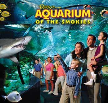 tennessee ripley's aquarium | Gatlinburg Tourism: Experience Ripley's Aquarium, Ober Gatlinburg Ski ...