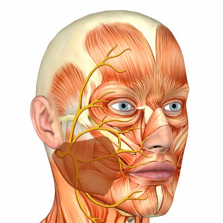 facial-nerve-trigeminal-lesbian-kiss-hd