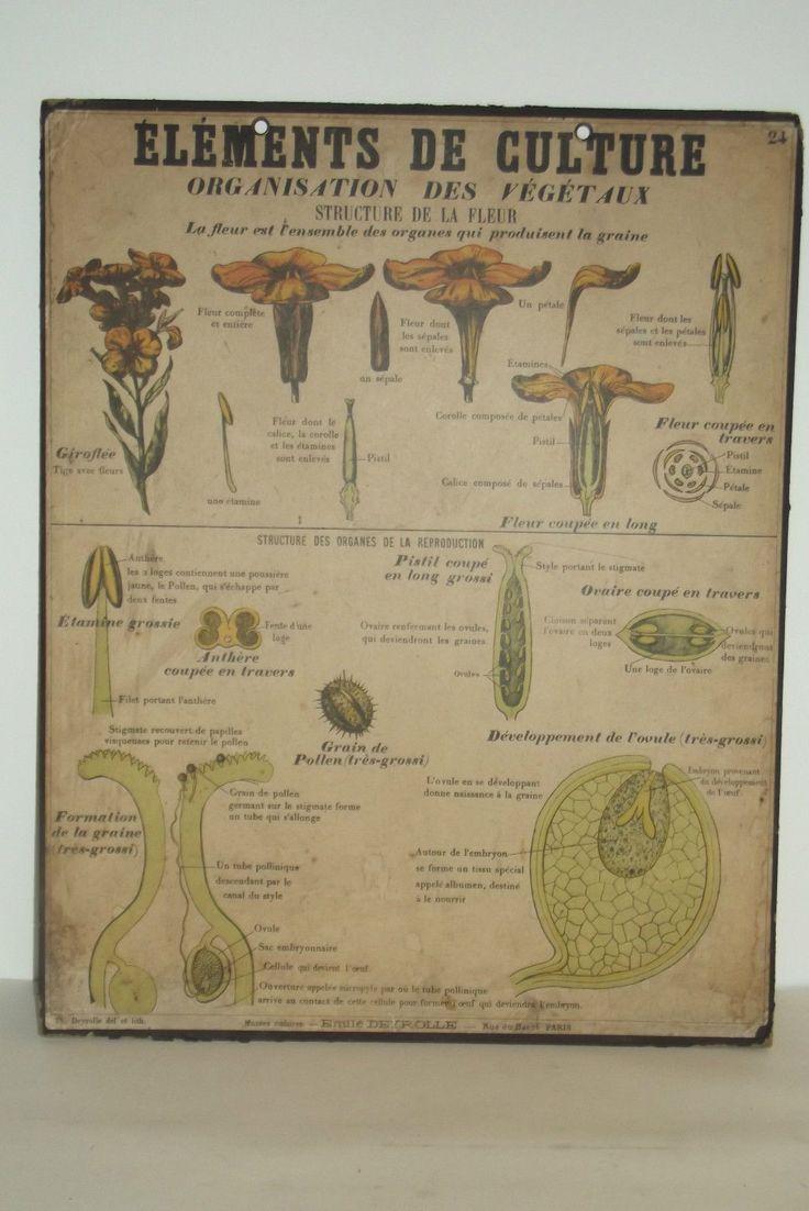 Ancienne affiche scolaire deyrolle planche ecole n 24 sciences naturelles d - Carte murale scolaire ancienne ...