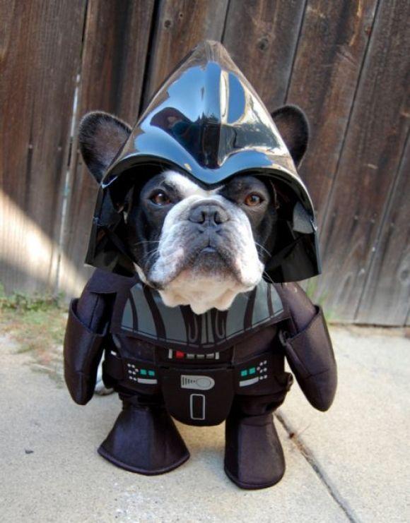 """I am unimpressed"": Darth Vader, Halloween Costumes, Dogs Costumes, Pet, Stars War, Dark Side, Boston Terriers, Animal, Starwars"