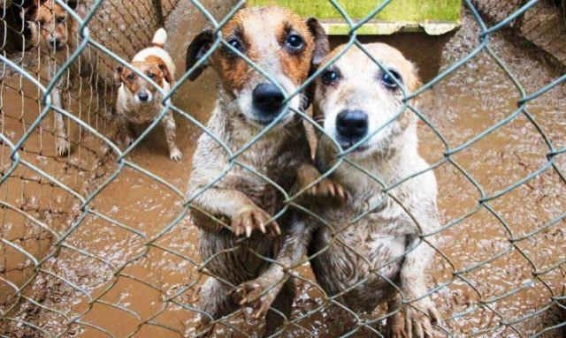 Από καταφύγια όλα τα κατοικίδια ζώα στα pet-shops!