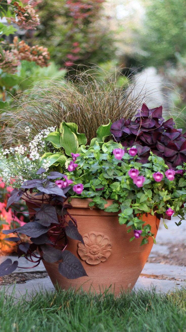 Garden Ideas Videos 34 best garden advice videos images on pinterest | flower pots