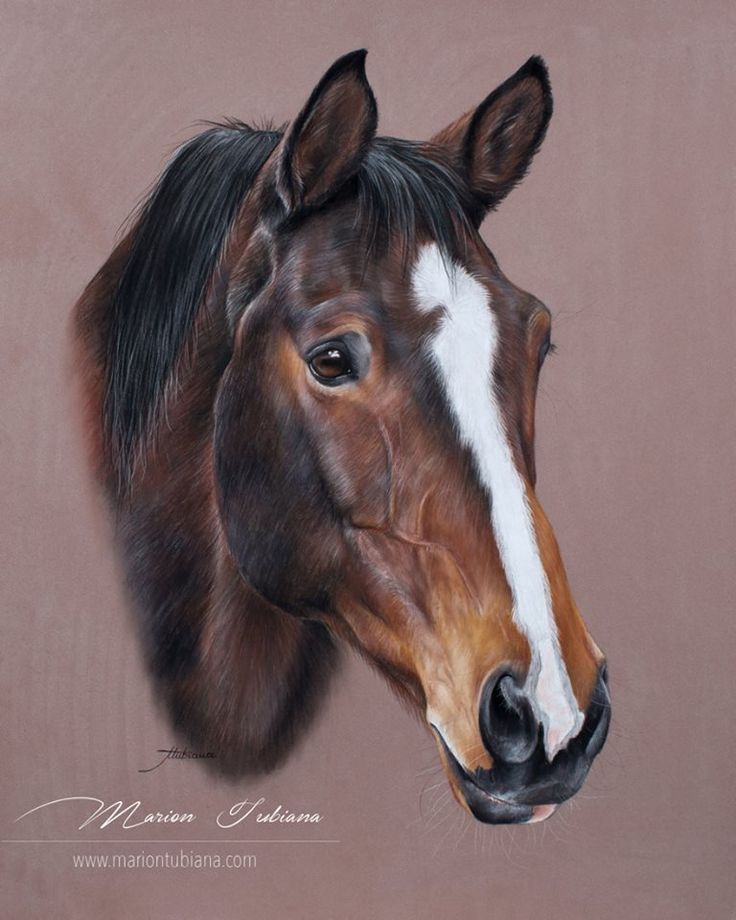 Bounty, one of my loves, by an amazingly talented artist, Marion Tubiana. www.mariontubiana.com https://www.facebook.com/tubiana.marion?fref=photo
