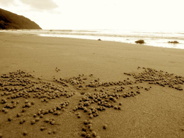 Tiny Crab Sand Balls, Cape Tribulation, QLD.