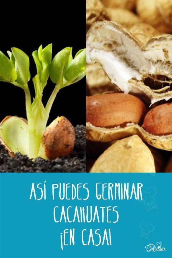 Así puedes germinar cacahuates en casa Mani, Diy, Gardens, Dress, Vegetables Garden, Easy Recipes, Dishes, Edible Garden, Food Items