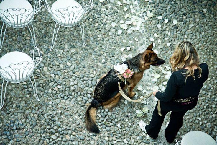Il cane degli sposi