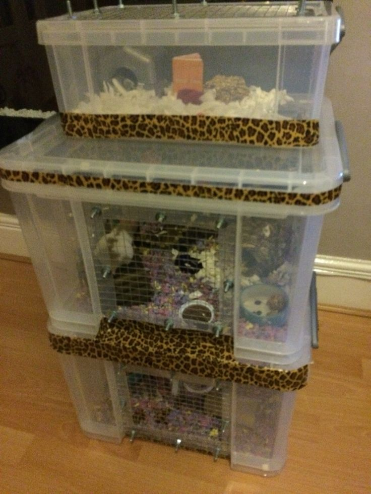 1000 images about hamster cages on pinterest ikea hacks for Plastic bin guinea pig cage