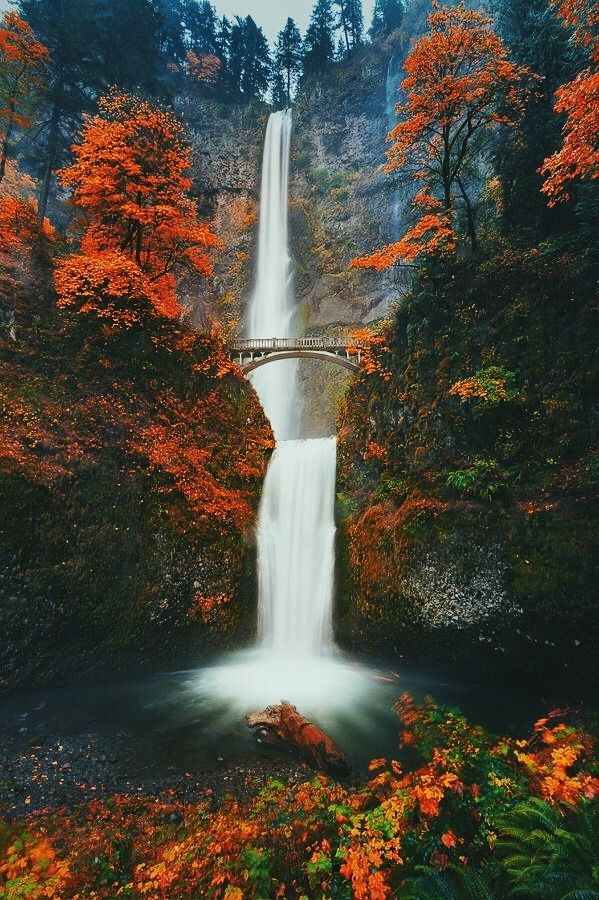 Fall color at beautiful Multnomah Falls in the Columbia River Gorge near Portland, Oregon....before the 2017 gorge fires.