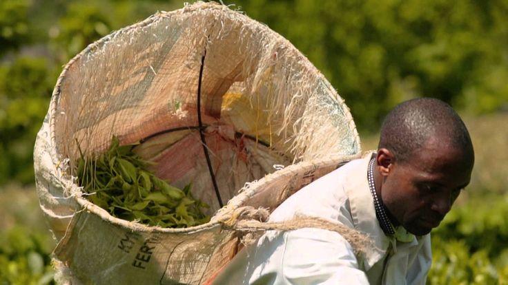 Zobacz, dlaczego warto kupować produkty Fairtrade. Poznaj codzienne troski i wyzwania, przed którymi stają Edson Maotchedwe oraz Tsale Mwale zajmujący się up...