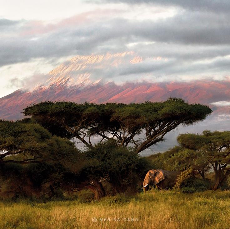 Слон у подножья горы Килиманджаро, парк Амбосели.  Кения, слоны.