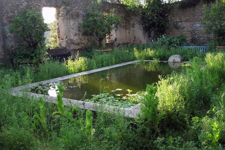 torecchia-italy-garden-dan-pearson-gardenista.  Inside courtyard walls, masses of wildflowers including daisies, nigella, and poppies (sown every year from seed) surround a raised rectangular pool filled with water lilies.