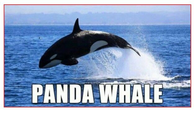 Alternate Animal Names Funnies Pinterest And Animals