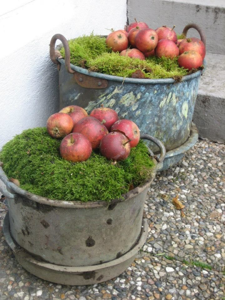 .moss with apples.