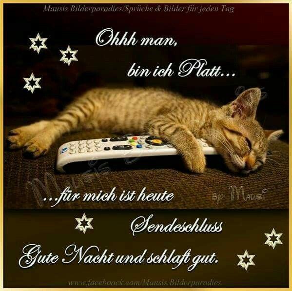 Ich Auch Mit Bildern Gute Nacht Gute Nacht Katze Gute Nacht