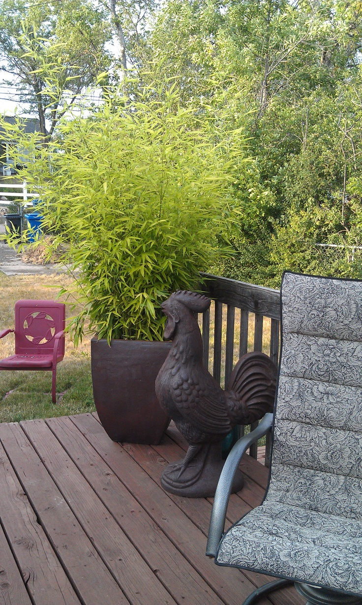 Palm and decorative rooster gardening outdoor living